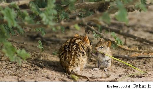 animal parents 26 520x303 عکس های فوق العاده زیبا از رابطه حیوانات با فرزندانشان