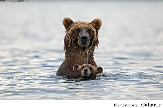 animal parents 9 520x346 عکس های فوق العاده زیبا از رابطه حیوانات با فرزندانشان