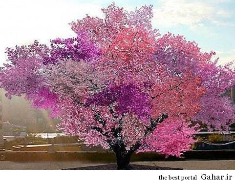 143141 206 درختی با 40 نوع میوه