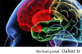 20140702081247 41 مغز انسان کوچک تر شده است