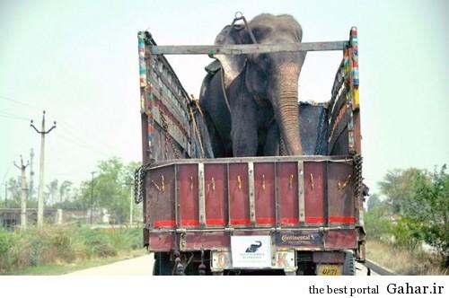 mail 110 500x332 اشک های دلخراش فیلی پس از آزادی از اسارت