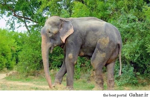 mail 23 500x325 اشک های دلخراش فیلی پس از آزادی از اسارت