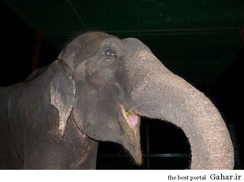 mail 34 500x374 اشک های دلخراش فیلی پس از آزادی از اسارت