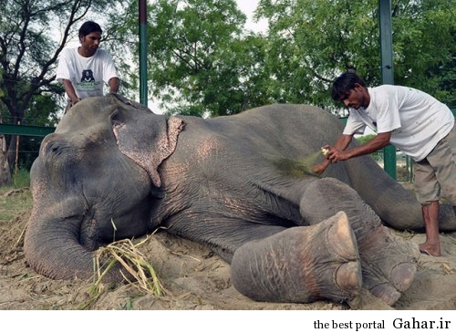 mail 43 500x365 اشک های دلخراش فیلی پس از آزادی از اسارت