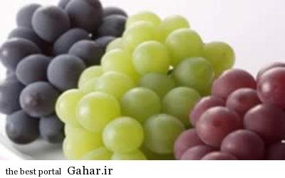 IMG19273471 مواد غذایی برای سلامتی چشم