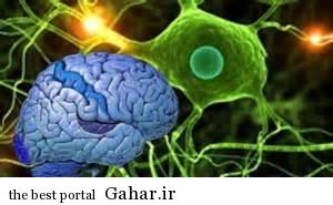 جدید در مغز کشف بخش کنترل فشار خون
