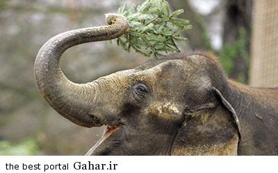 IMG13393037 هواشناسی فیل