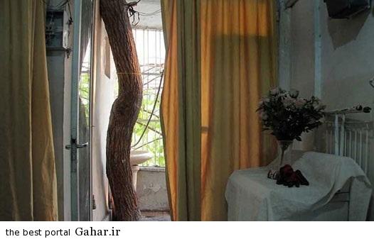 2752088 914 دوستی صمیمی یک خانه و درخت در تهران / عکس