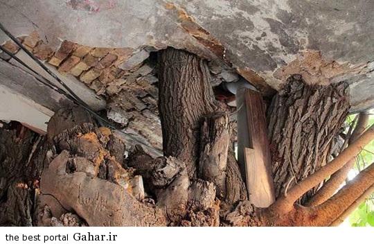 2752089 148 دوستی صمیمی یک خانه و درخت در تهران / عکس