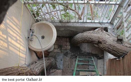 2752090 886 دوستی صمیمی یک خانه و درخت در تهران / عکس