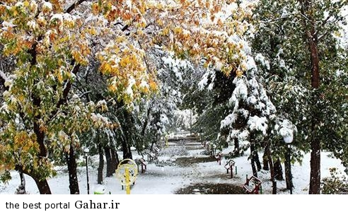 IMG20565353 جلوگیری از سرماخوردگی با طب سنتی