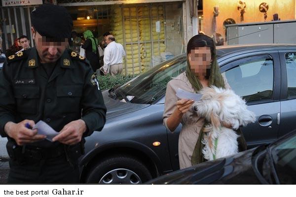 sag gardani جریمه 10 تا 100 میلیونی برای سگ گردانی در شهر