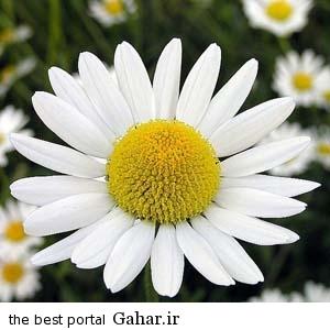 539884 DwlAeTf2 بهترین گیاه برای درمان سرماخوردگی