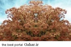 1349bfaf2b01 داستان خواندنی درخت قوم بنی اسرائیل