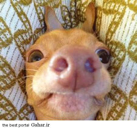 خنده دار 4 1 تصاویر از یک سگ زشت که عکس روی تی شرت شد!
