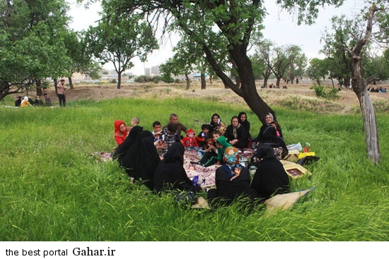 528609 631 تصاویری از آئین سنتی پنجاه بدر در قزوین