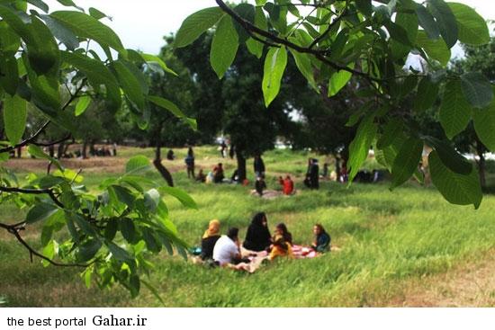 528614 700 تصاویری از آئین سنتی پنجاه بدر در قزوین