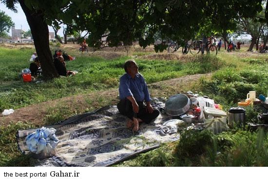 528622 498 تصاویری از آئین سنتی پنجاه بدر در قزوین
