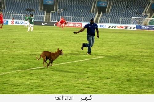 dog football 11 500x333 وقتی یک سگ باعث توقف مسابقه فوتبال شد /عکس