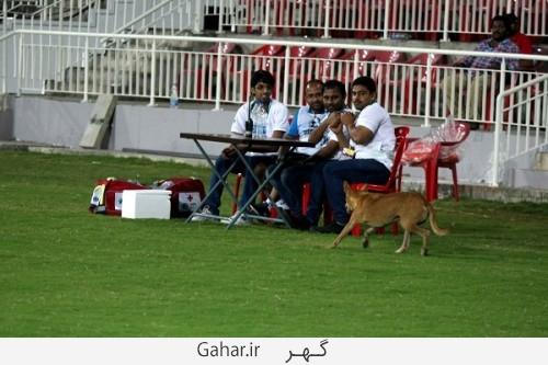 dog football 22 500x333 وقتی یک سگ باعث توقف مسابقه فوتبال شد /عکس