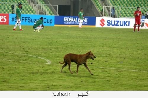 dog football 33 500x333 وقتی یک سگ باعث توقف مسابقه فوتبال شد /عکس