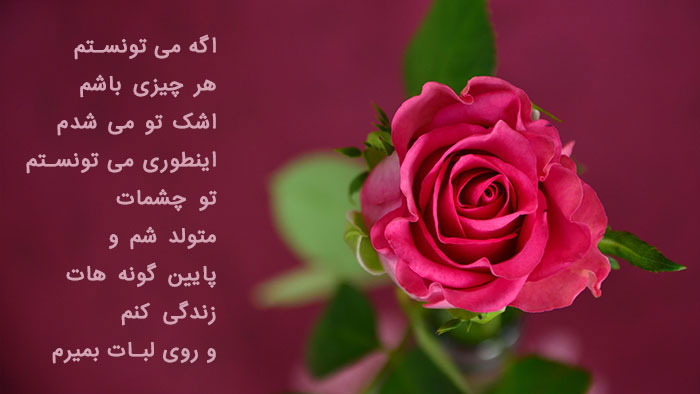 160581 Gahar ir عکس پروفایل گل های خاص و زیبا