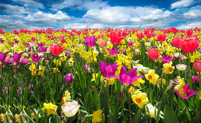 185719 Gahar ir عکس پروفایل گل های خاص و زیبا