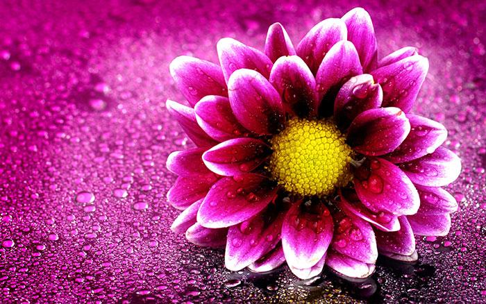 209181 Gahar ir عکس پروفایل گل های خاص و زیبا