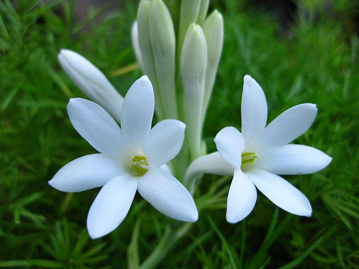 560075 Gahar ir عکس پروفایل گل های خاص و زیبا