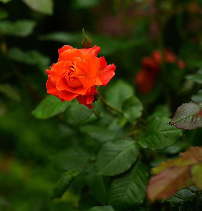 590963 Gahar ir عکس پروفایل گل های خاص و زیبا