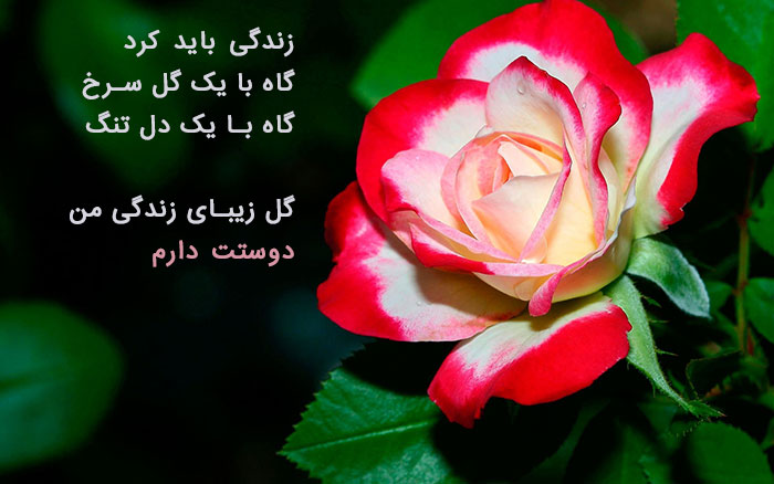 831988 Gahar ir عکس پروفایل گل های خاص و زیبا