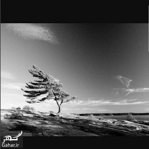 865597 Gahar ir عذرخواهی احسان خواجه امیری از آزاده نامداری + عکس