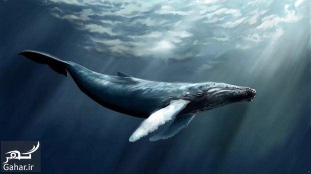 624929 Gahar ir بازی نهنگ آبی چیست ؟ + کسانی که قربانی این بازی شدند