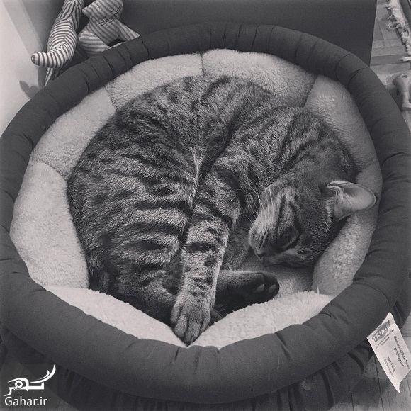 726557 Gahar ir مردن گربه هانیه توسلی در فضای مجازی غوغا به پا کرد!