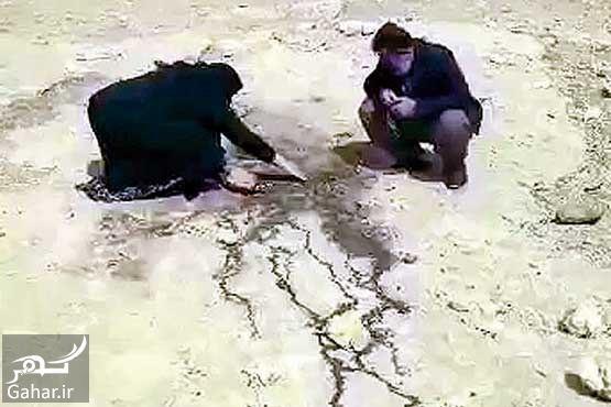 901881 Gahar ir ردپای شيطان پرستی در سوزاندن و قتل يک جوان توسط دوستان صميمی اش / عكس و فیلم