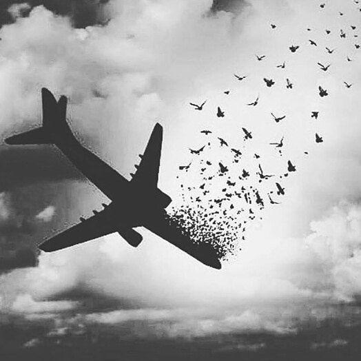 815961 Gahar ir عکس پروفایل سقوط هواپیما
