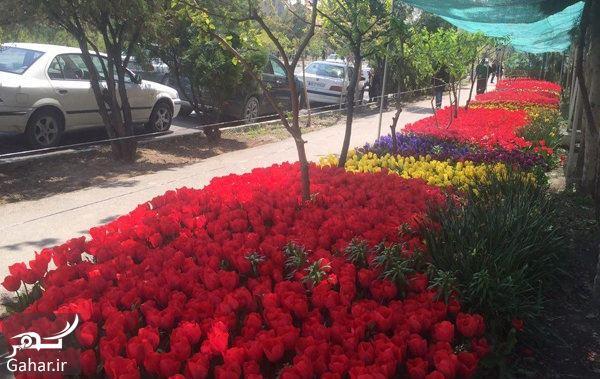 586141 Gahar ir آدرس باغ لاله شهرک غرب + دلیل جالب راه اندازی باغ لاله