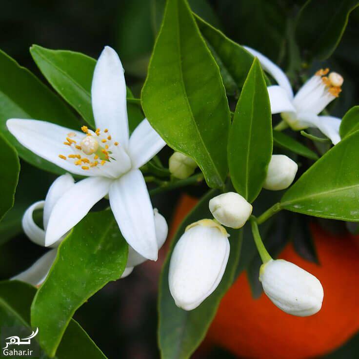 256622 Gahar ir عرقیات مناسب فصل بهار را بشناسیم!