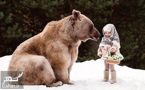 160445 Gahar ir تعبیر خواب خرس سیاه