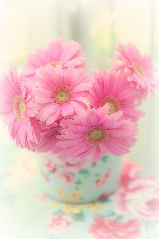 231193 Gahar ir عکس گل های زیبا برای پروفایل