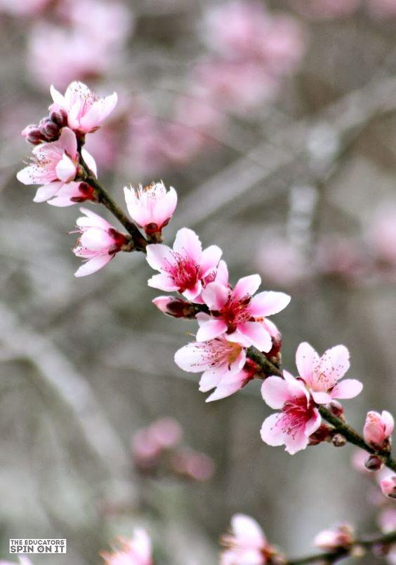 502964 Gahar ir عکس گل های زیبا برای پروفایل