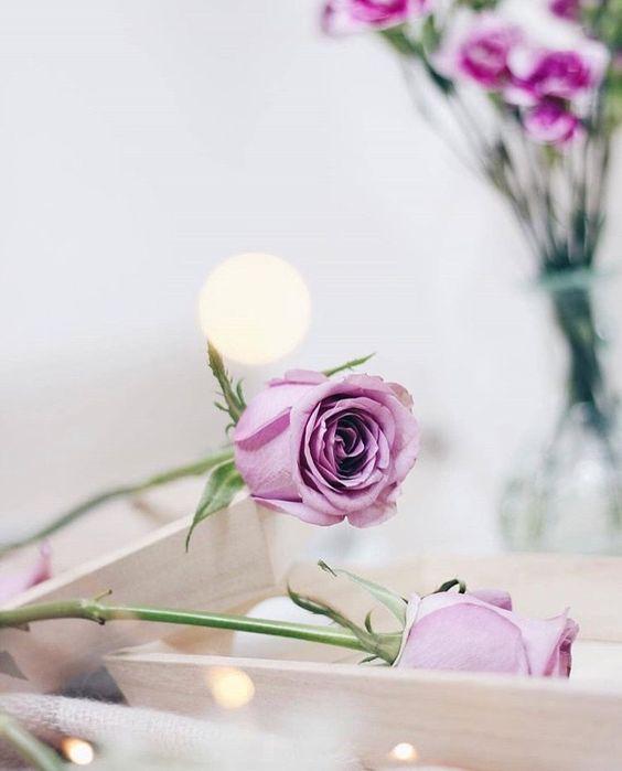 934429 Gahar ir عکس گل های زیبا برای پروفایل