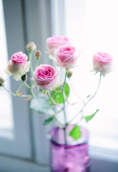 971594 Gahar ir عکس گل های زیبا برای پروفایل