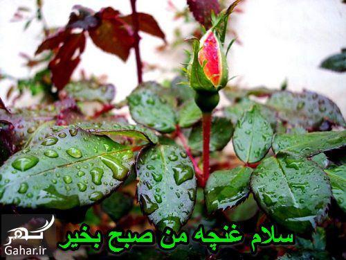 568869 Gahar ir صبح بخیر بهاری جدید