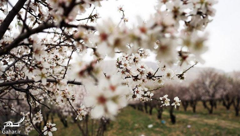 076416 Gahar ir پیام و متن تبریک روز شیراز