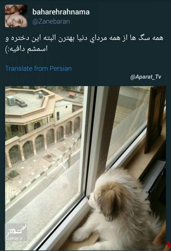 1474764686 بهاره رهنما : همه سگ ها از همه مردای دنیا بهترن!