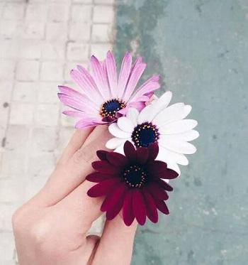 1483738449 عکس پروفایل دخترونه ( 50 تصویر دخترانه برای پروفایل)