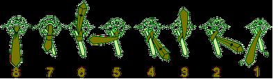 1505666455 آموزش تصويری بستن كراوات دو گره ، سه گره ، كراوات دستمال گردنی و چليپا