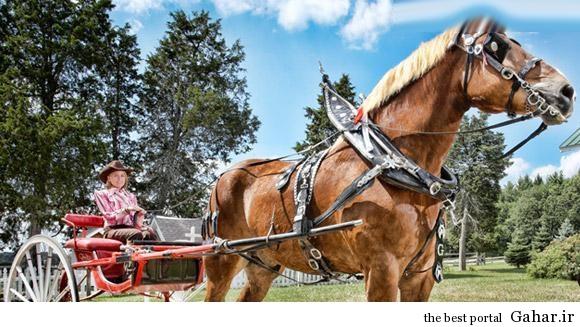 عکس بلندترین اسب جهان, جدید 1400 -گهر