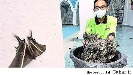 هجوم حشرات عجیب و غریب به مالزی, جدید 1400 -گهر